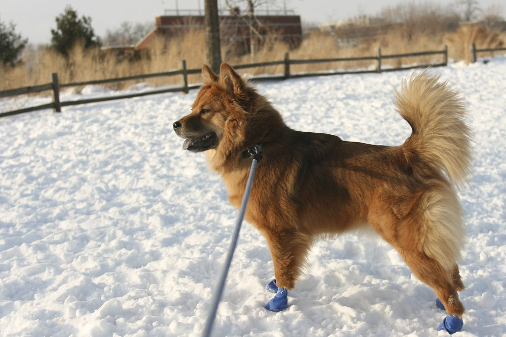 Best Dog Booties For Cold Weather
