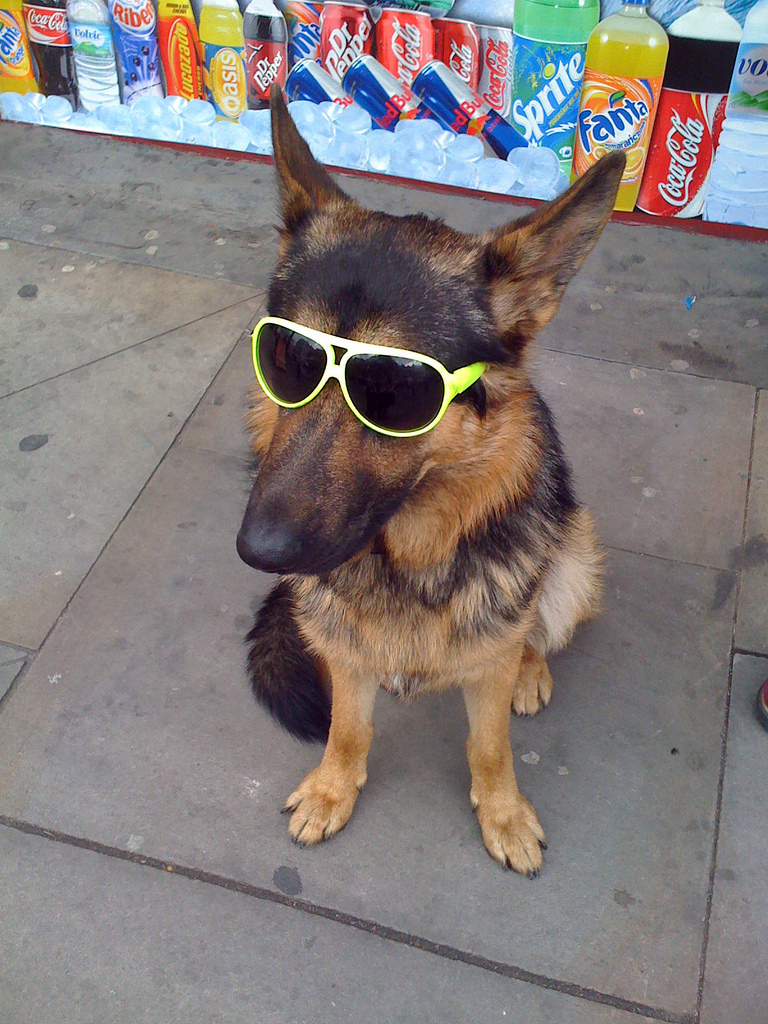 Hipster dog in sunglasses