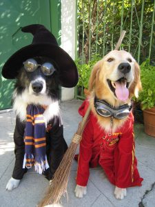 Dog Harry Potter
