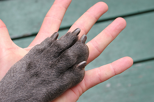 Dog's paw on a human's hand - how to stop a dog's nail from bleeding
