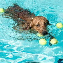 Dog Days of Summer pool party