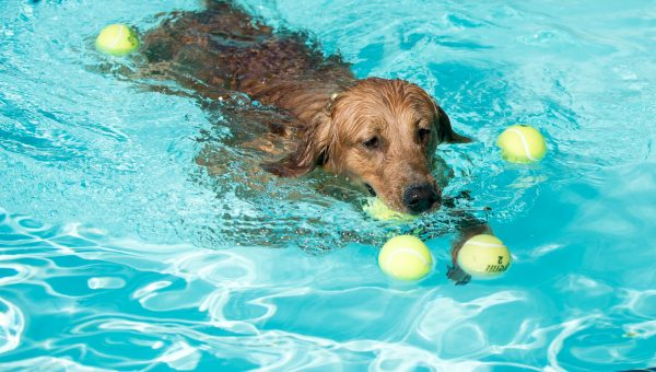 Seattle's Dog Days of Summer Pool Party