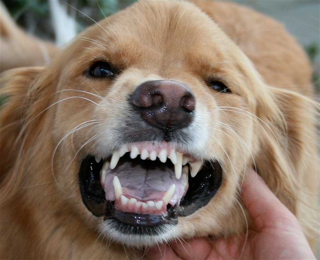 Brush Dogs Teeth With Human Toothpaste