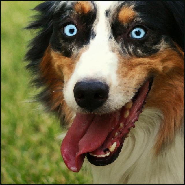 wild eyed dog