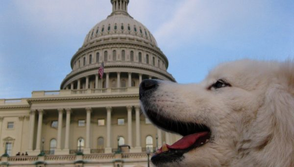 The Top Dog Names in Washington DC
