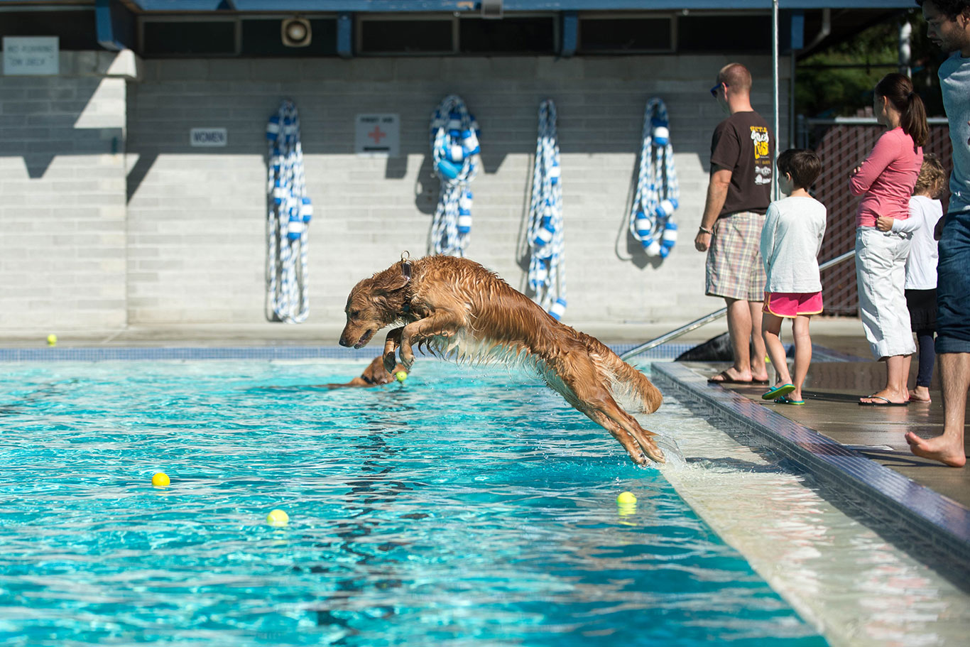dog dives into pool