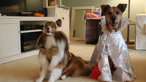 DIY Dog Costumes for All Shapes and Sizes