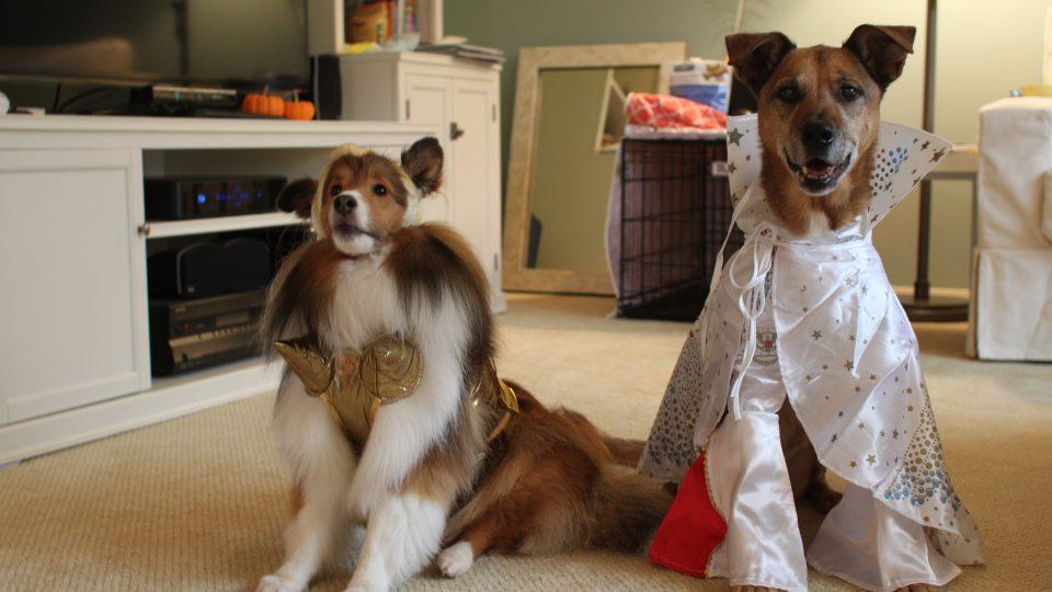 Dog rockstar costume