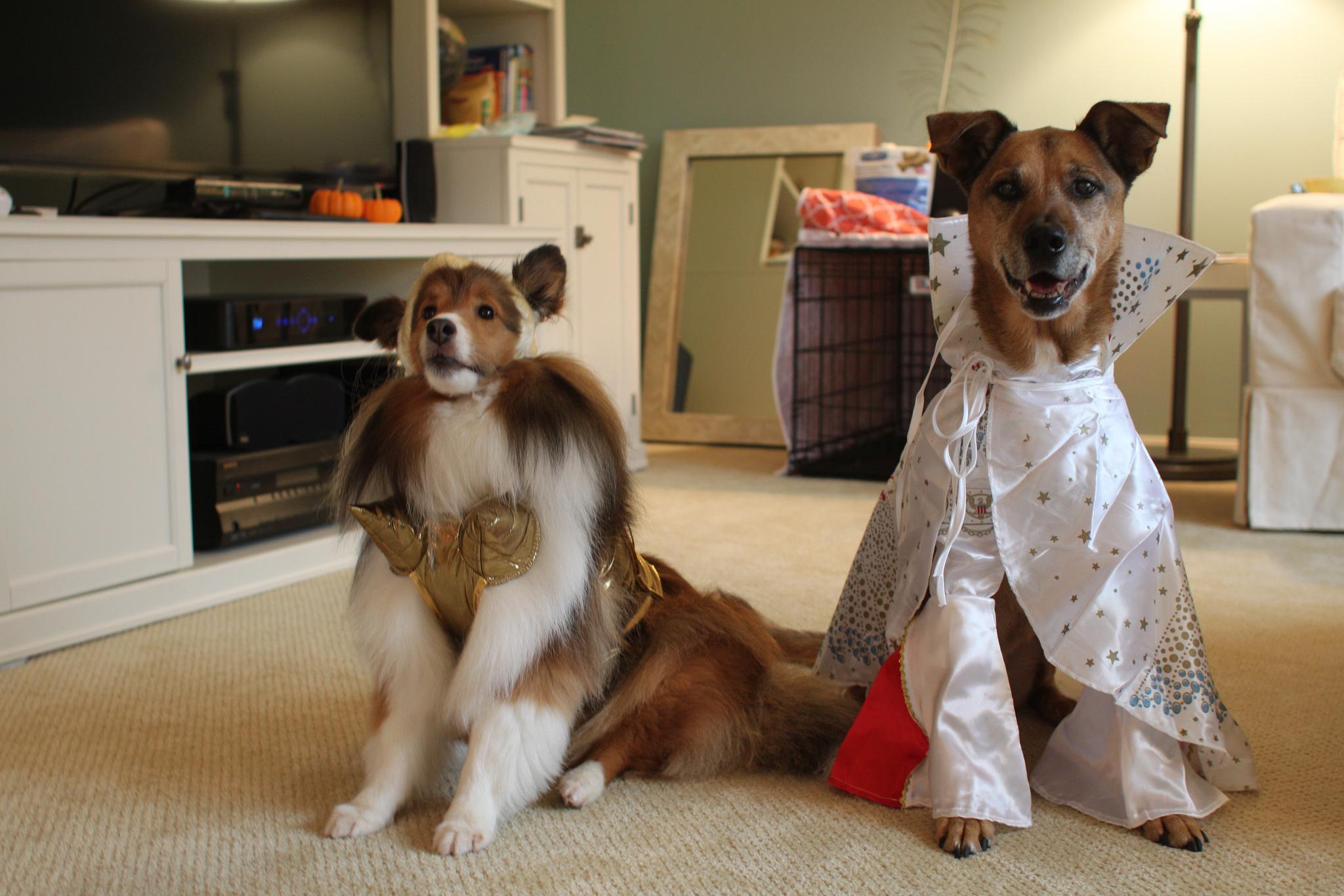 Homemade female dog costumes - photo#9
