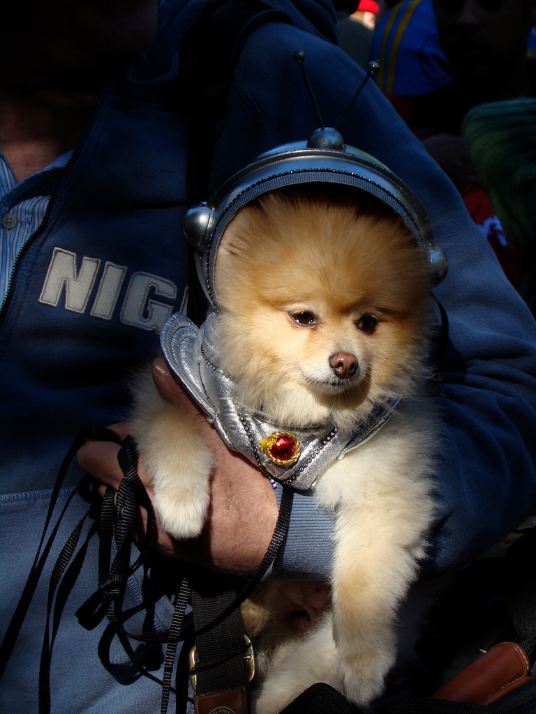 Dog astronaut - dogs in space