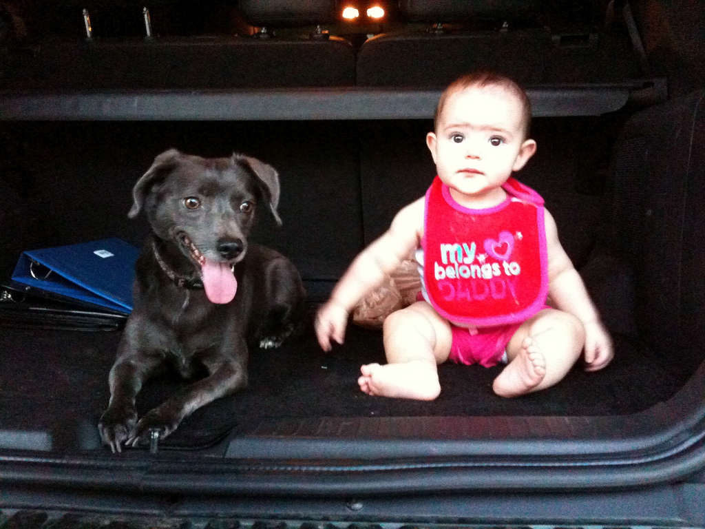 Dog and baby in car - how to introduce your dog to your baby