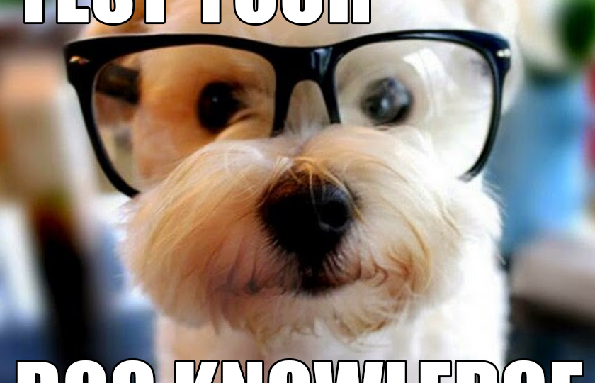 Dog in glasses - test your dog knowledge with this quiz.