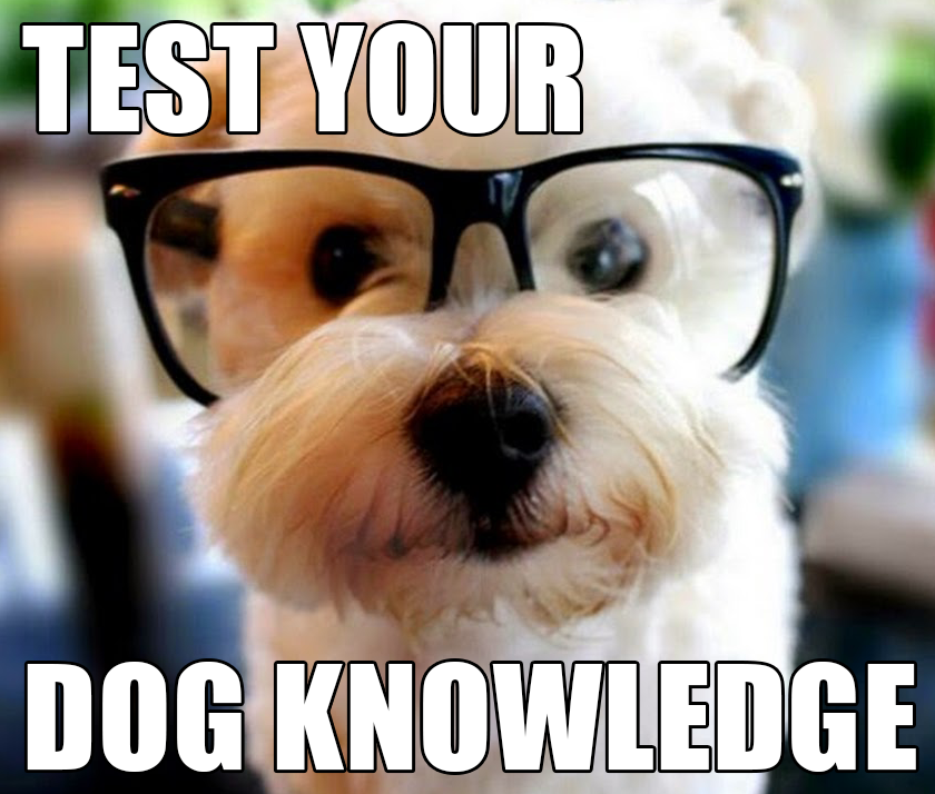 QUIZ: How Well Do You Know Your Dog Slang?