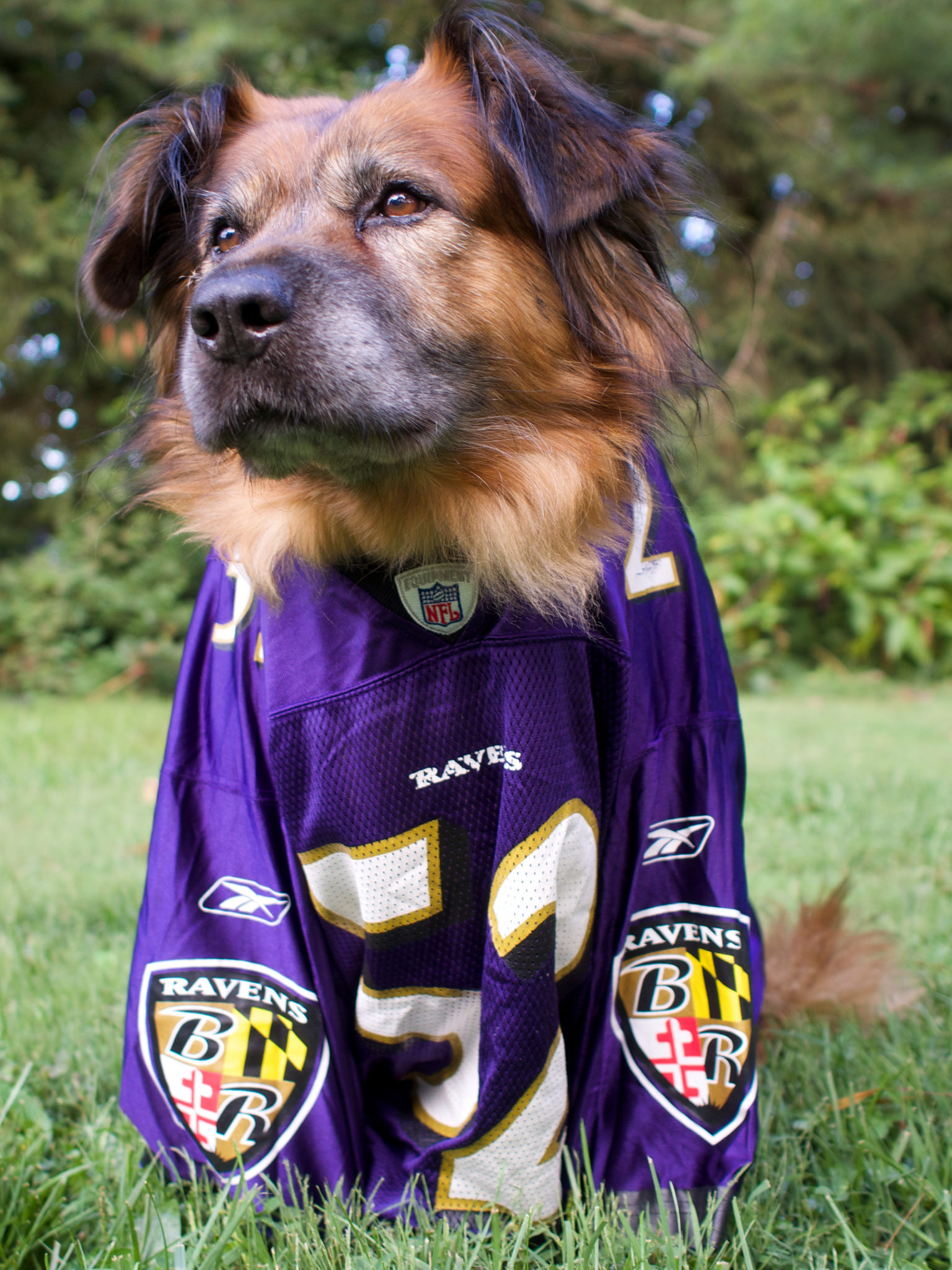 Dog in a jersey