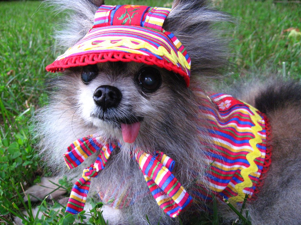 Dog in silly outfit