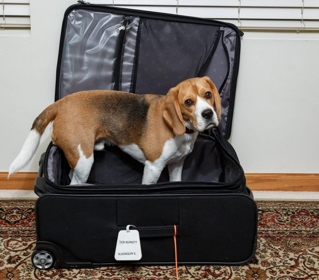 Dog in a suitcase - emergency tips for dog owners