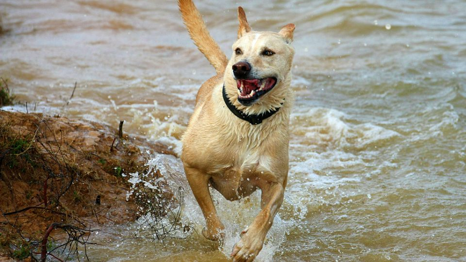 Dog running in water - best dog parks in houston