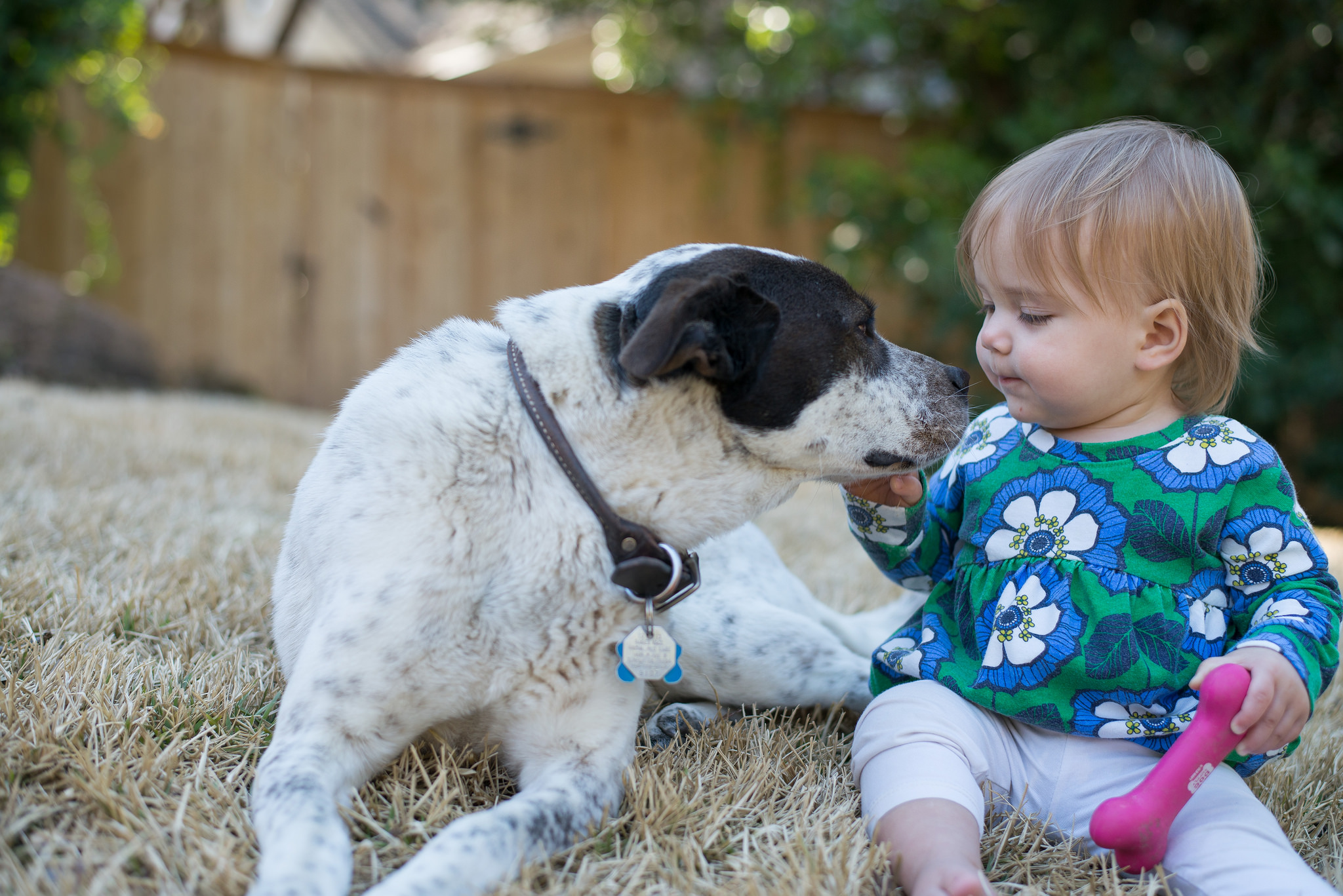 Dog sniffs baby - how to introduce your dog to your baby
