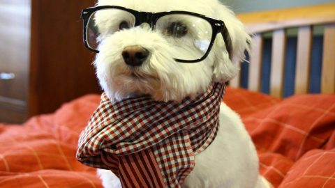 Super hipster dog in a scarf and glasses
