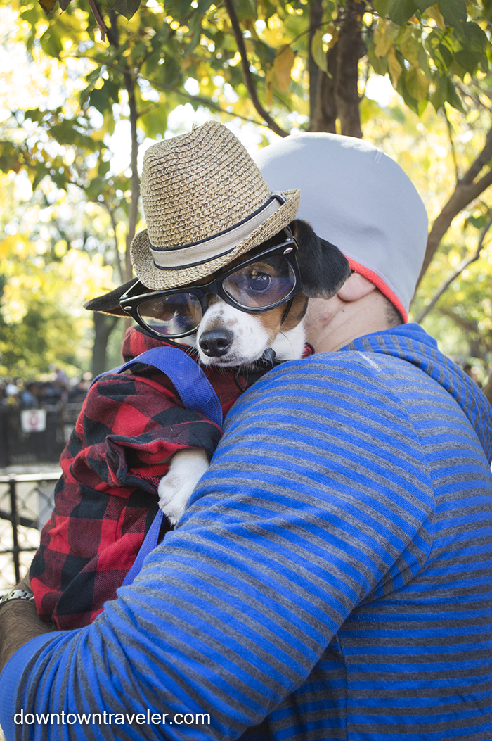 Hipster dog in a sweat, hat, and glasses