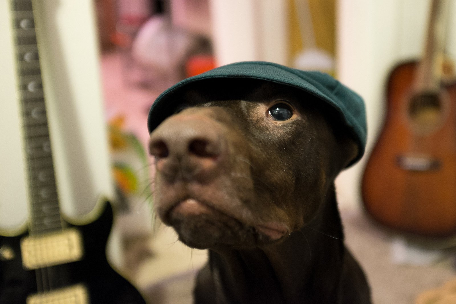 Hipster dog in a hat