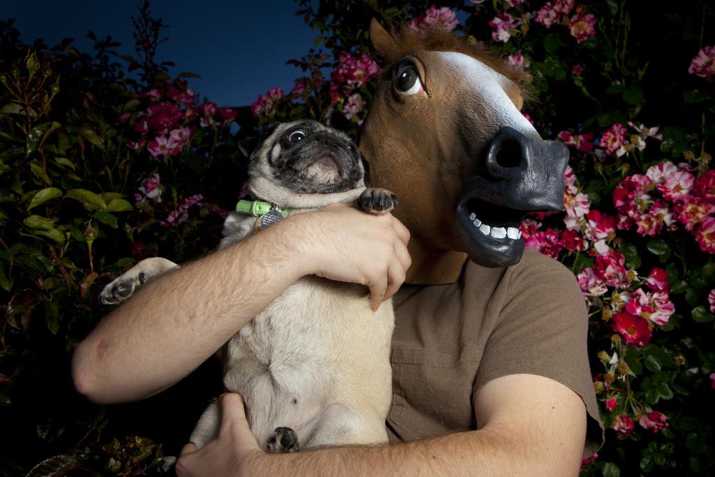 Horse-man scares dog - dog costumes