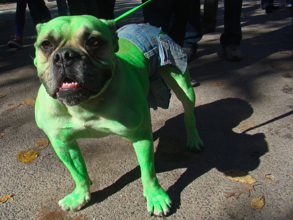 Hulk dog - obsessed with your dog