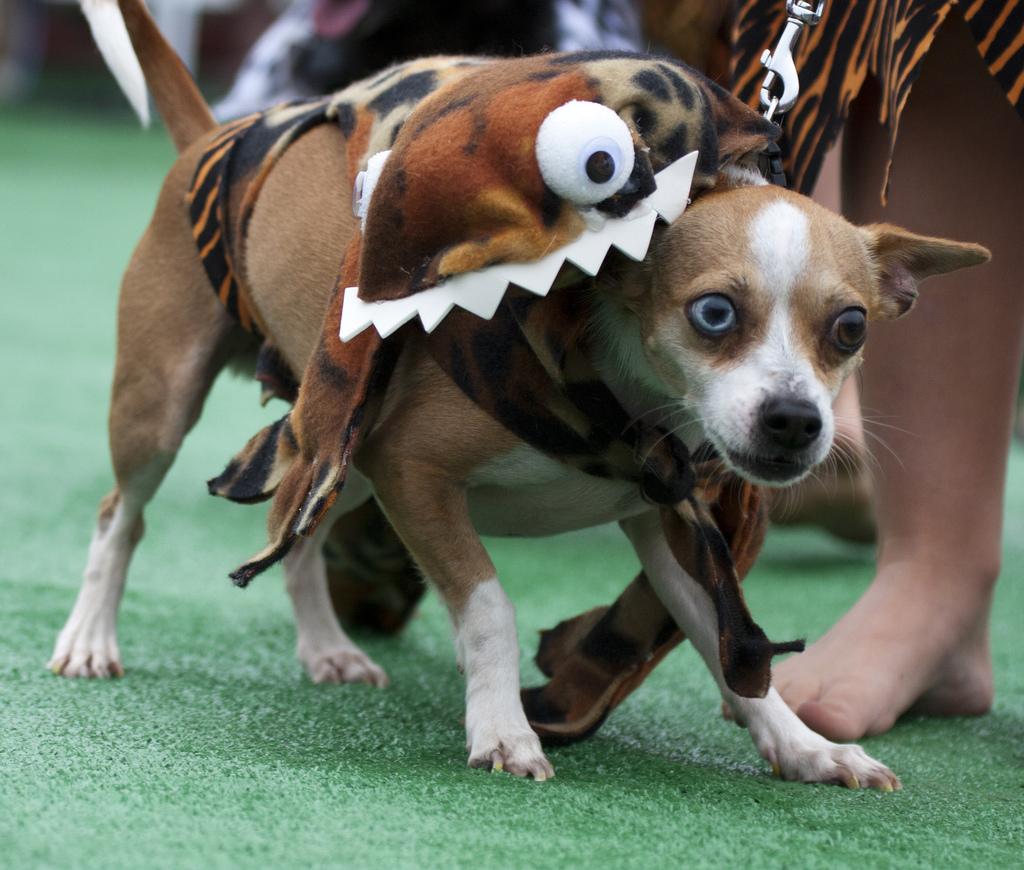 Monster dog costume