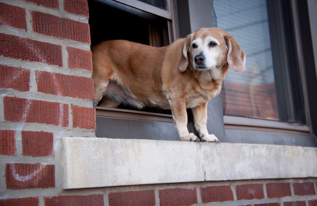 Dog in a window - NYC dog laws