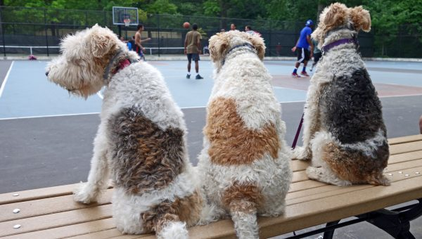 The Top Dog Names in New York City