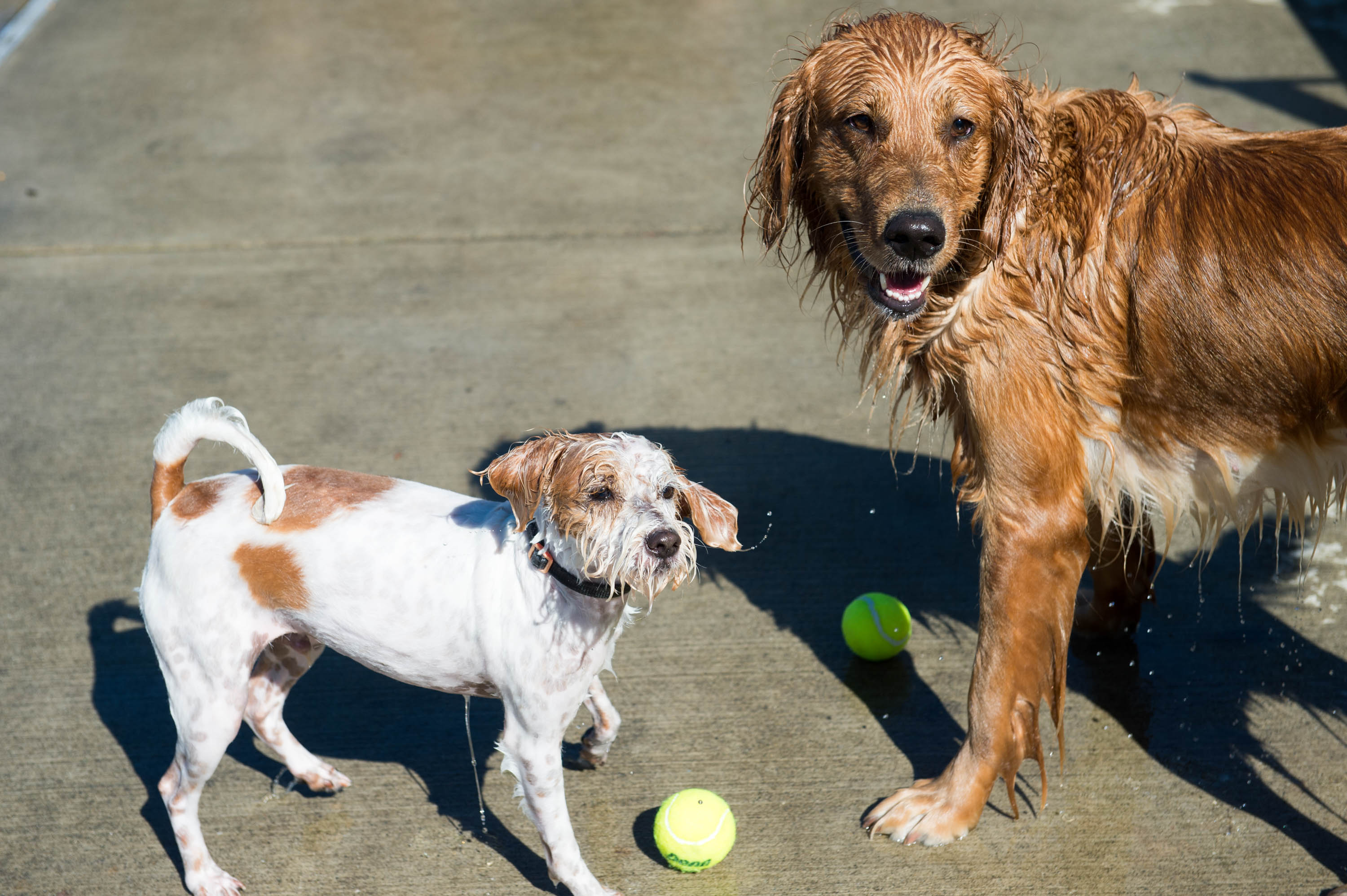 Seattle dog pool party