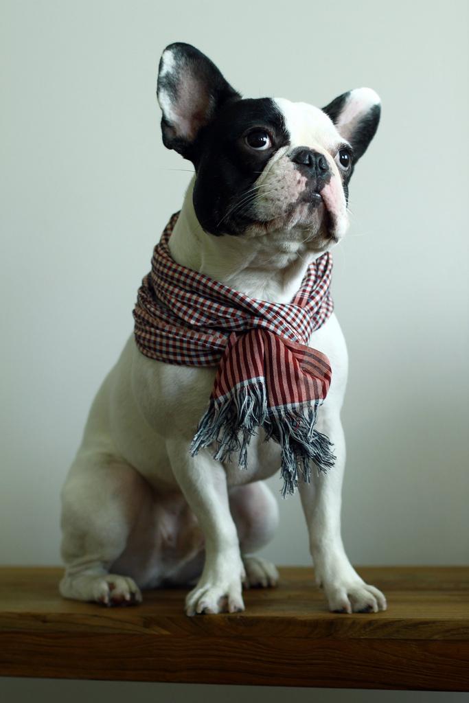 Portland hipster dog