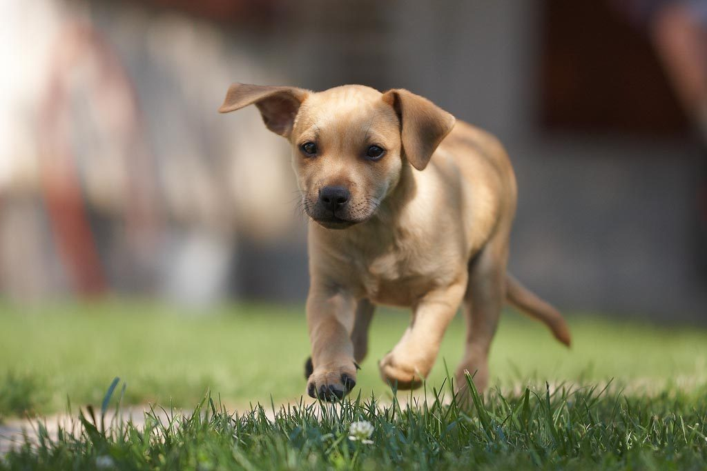 Pupping running - the truth about dognapping