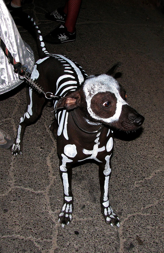 How to Make a Dog Skeleton Costume
