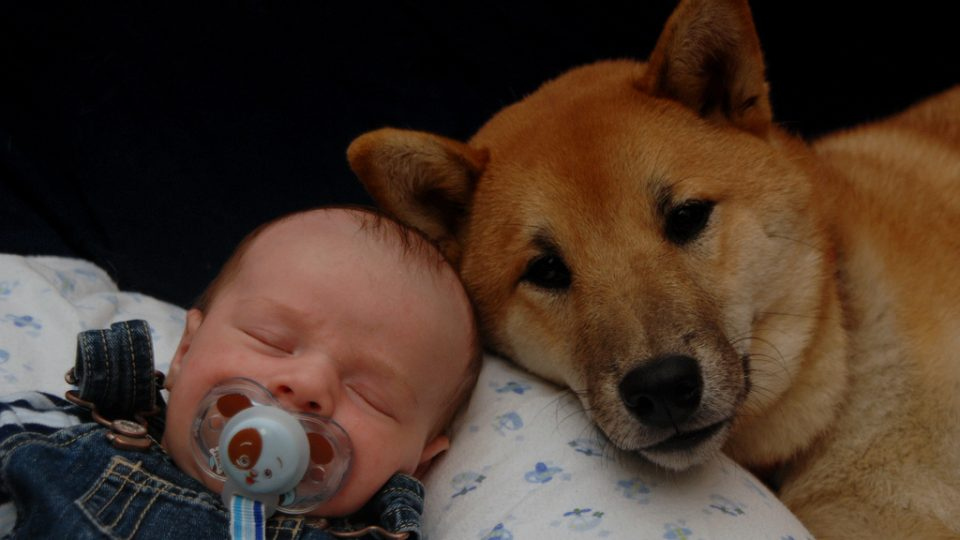 Sleeping baby with dog - how to introduce your dog to your baby