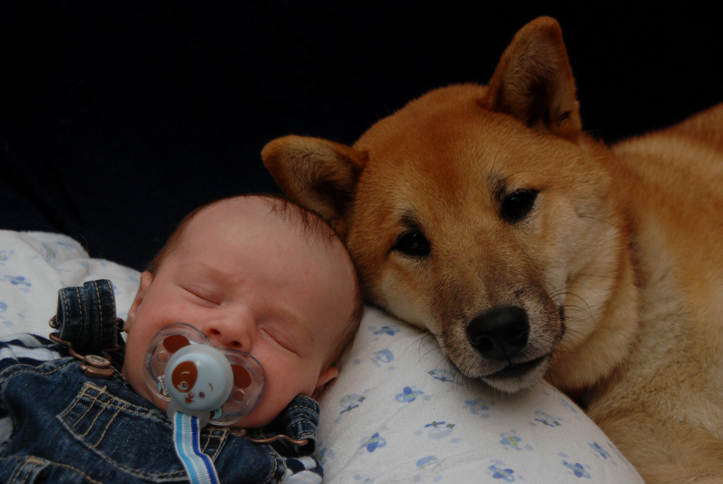 How to introduce your dog to your baby rover blog for How to introduce a dog to a new dog