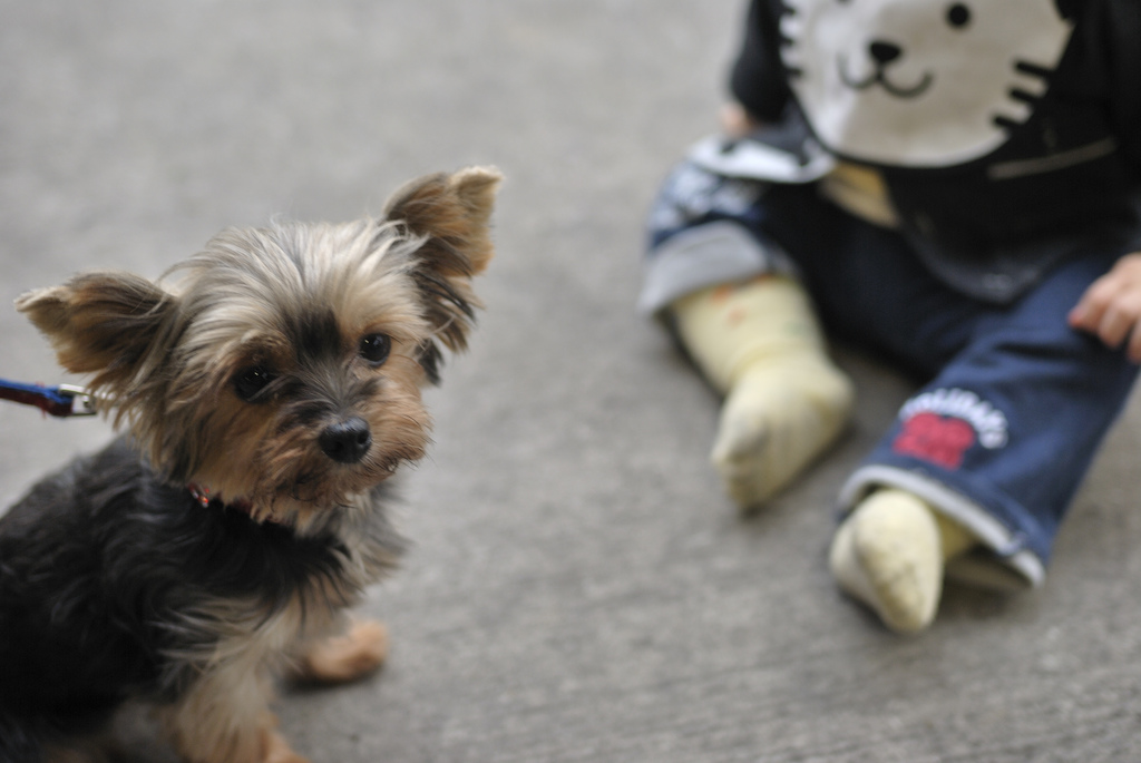 Small dog with baby - how to introduce your dog to your baby