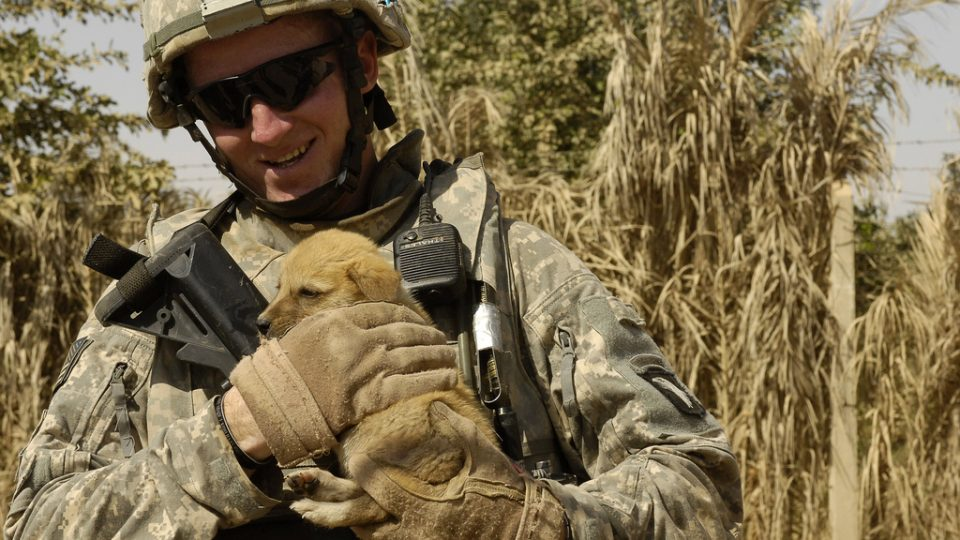 Dog reunited with solider - puppy carried by army