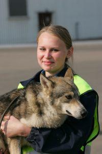 Sulimov jackal dog hybrid Aeroflot