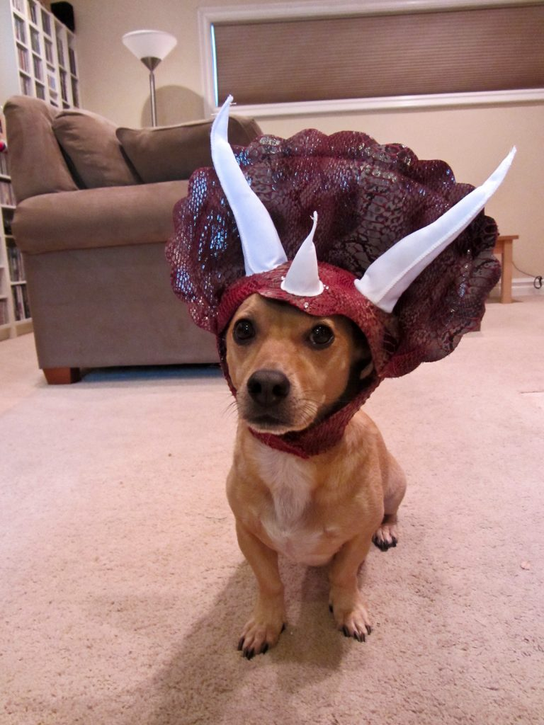Tricerotops dog costume