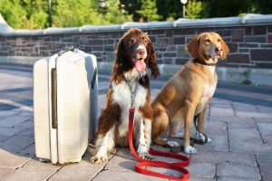 Two dogs with a suitcase