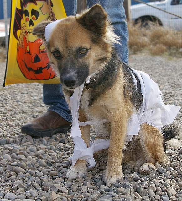 Zombie dog - dog halloween costumes