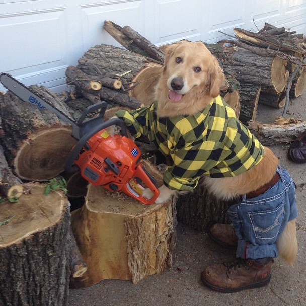 bailey-lumberjack