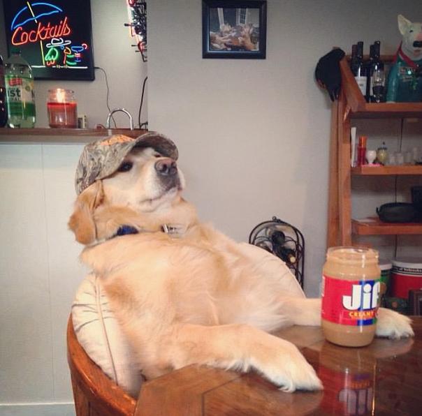 bailey-peanut-butter