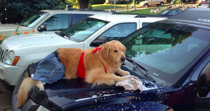 bailey-washes-car
