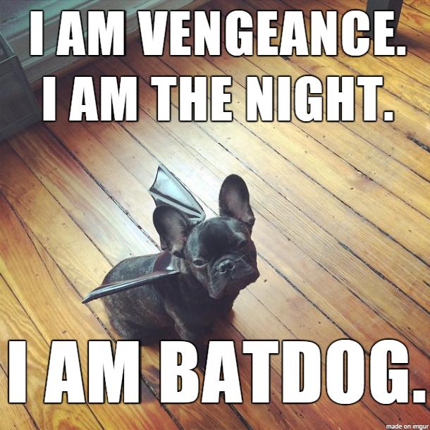 batdog