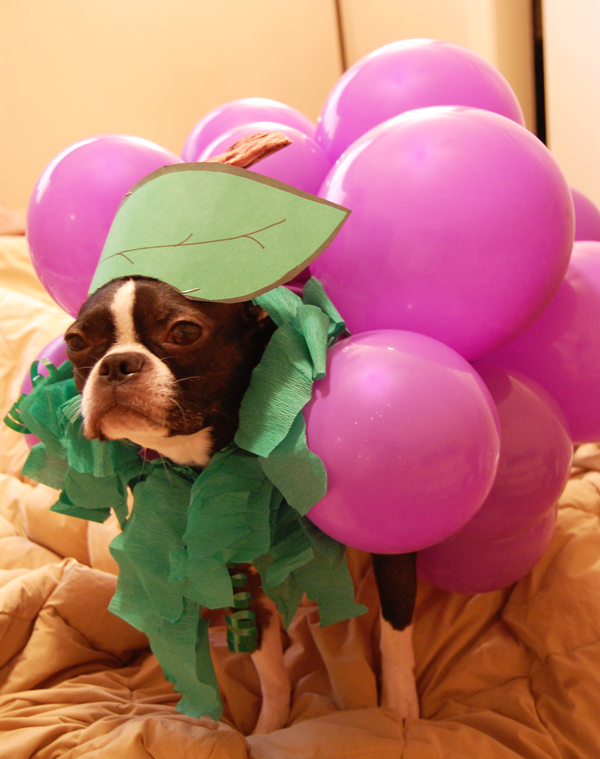 Boston dressed as grapes