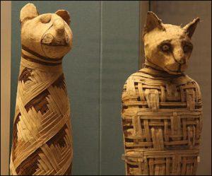 cat mummies of the British Museum