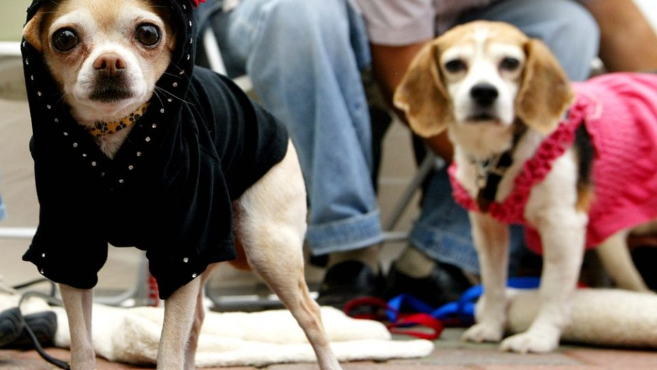 Two dogs in cute outfits - fall fashion for dogs