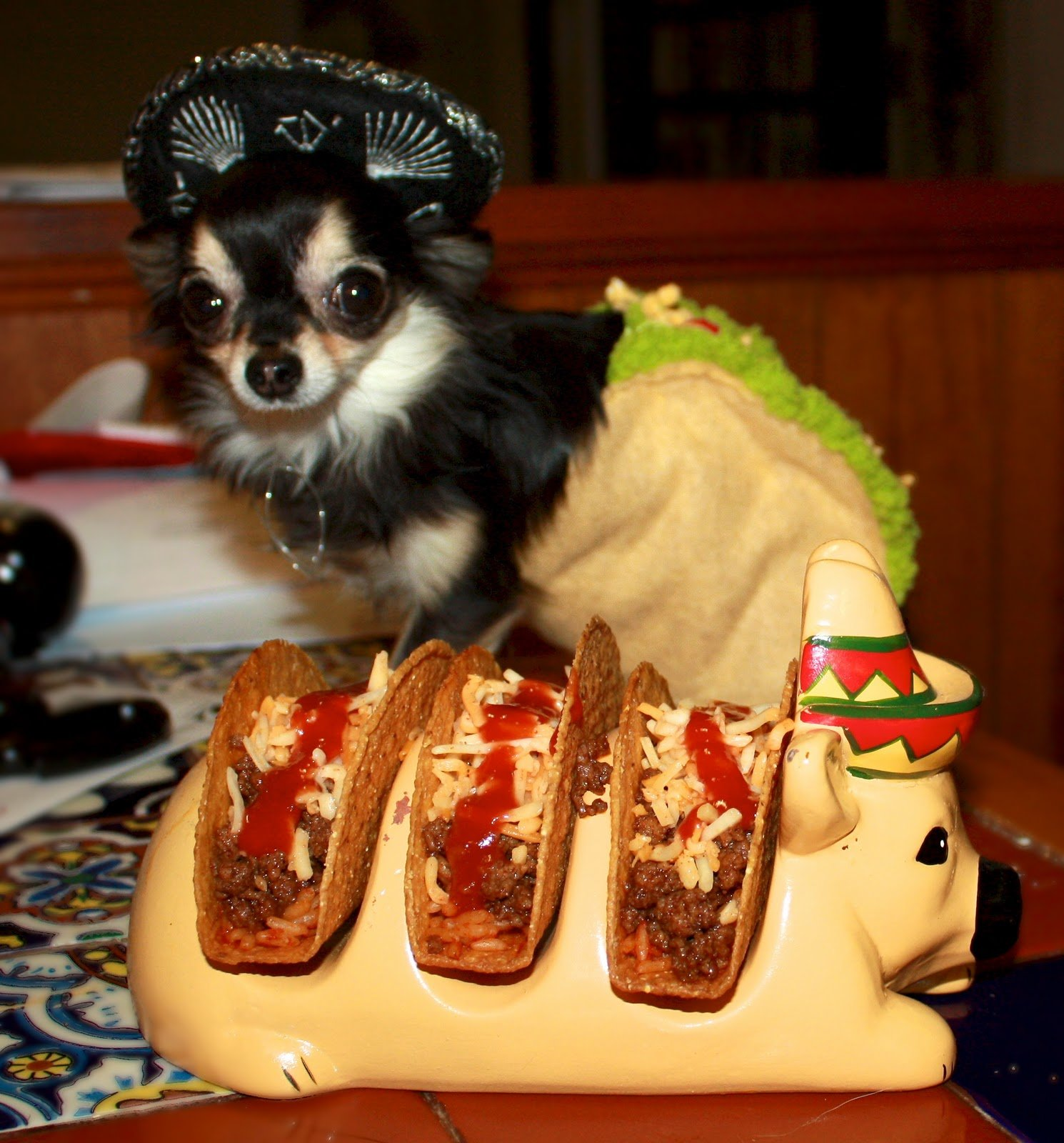 chihuahua taco costume & 9 Dogs Who Totally Nailed Halloween | The Dog People by Rover.com